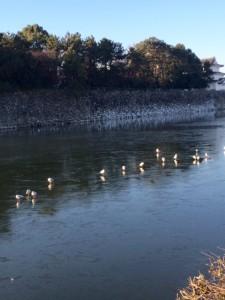 凍り付いたお堀と鳥3