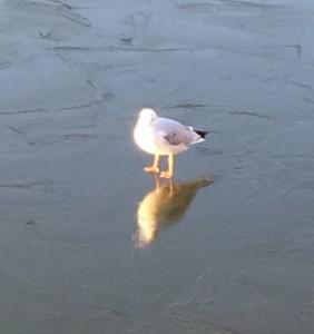 凍り付いたお堀と鳥2